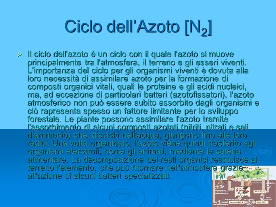 Ciclo dell'Azoto [N2]